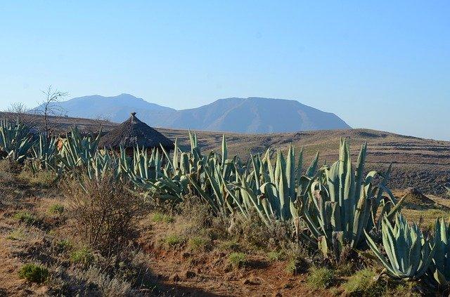 afrikanische Landschaft mit Aloe Vera Pflanzen